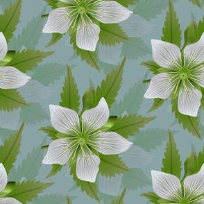 Venus Flower & Leaf