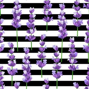 lavender pattern on black lines