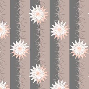 cactus paloma