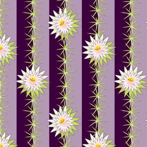 cactus purple night