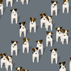 Pack of Parson / Jack Russell Terriers with cute head tilt - slate blue gray