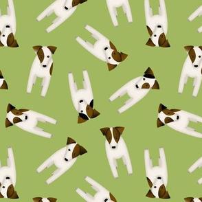 Parson / Jack Russell Terriers random pattern / green