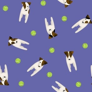 Parson / Jack Russell Terriers standing at attention / Purple