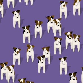 Pack of Parson / Jack Russell Terriers with cute head tilt - purple