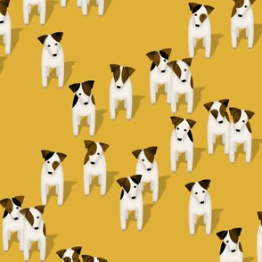 Pack of Parson / Jack Russell Terriers with cute head tilt - goldenrod yellow