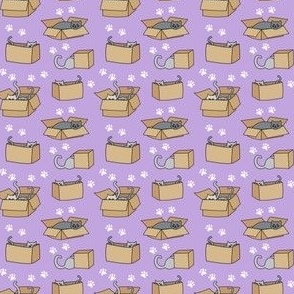 Cats in Cardboard Boxes on Lavender
