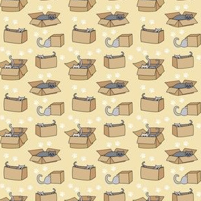 Cats in Cardboard Boxes on Yellow