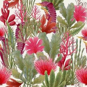 British seaweed botanical illustrations