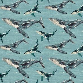 Blue Whale - Medium