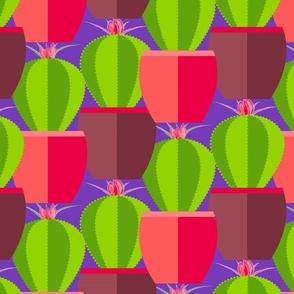 modern pink cactus