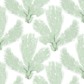 Sea Fan Coral Green White