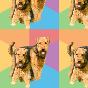 airedale terriers2