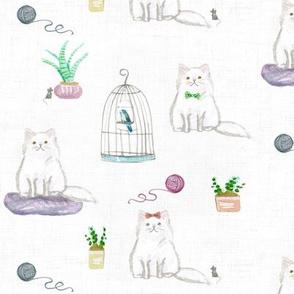 hey cat! persian white