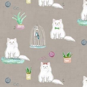 hey cat! persian mocha