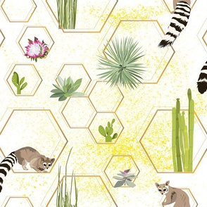 desert hexagons - succulents and ring-tailed cats