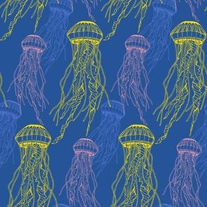 Atlantic Sea nettle, hand drawn