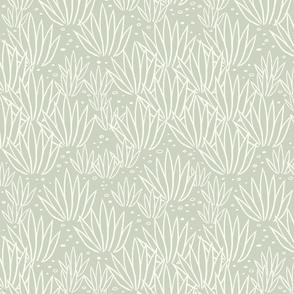 modern agave