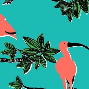 Scarlet Ibis Aqua
