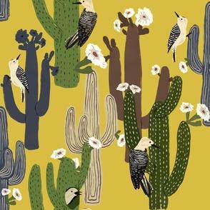 Desert Wrens