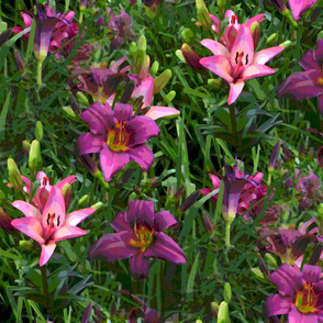 purple daylilies 2fa layers