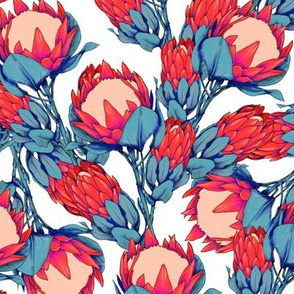 red proteas on white
