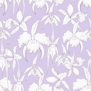 white orchids on lavender
