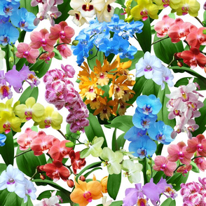 Lively Orchids Tropical Paradise