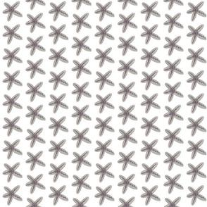 Starfish - BW