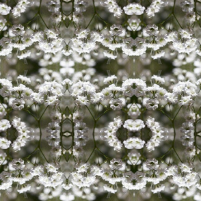 Babys Breath Abstract Repeat Pattern