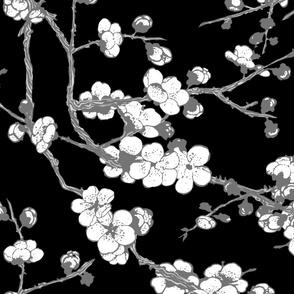 sakura ( Black and white)