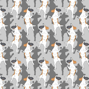 Mod LCP disc hound Beagles