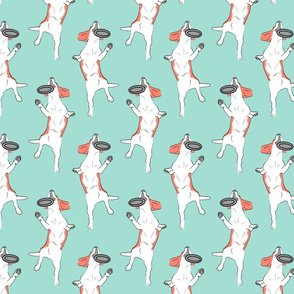 Mod LCP disc hound Beagles - Coral and Mint