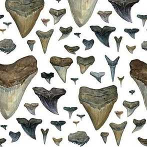 shark teeth watercolor