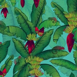 Banana Blooms