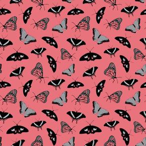 Coral_Butterflies_Stock