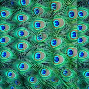 Peacock feathers - pattern runs sideways