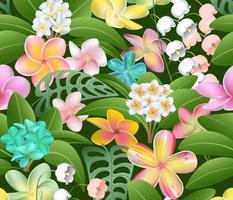Plumeria Plant Paradise