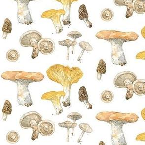 wild mushrooms watercolor