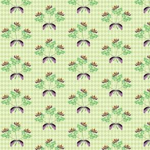 tres fleurs pea harlequin