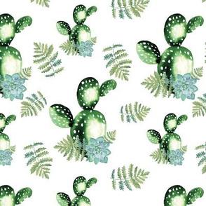 Cactus and suculent