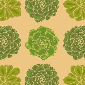 3succulent12