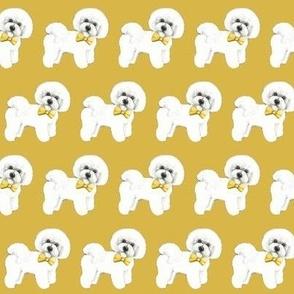 Bichon Frise, mustard yellow bows