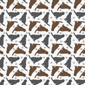 Tiny Flat Coated Retrievers - gray