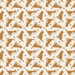 Tiny Nova Scotia Duck Tolling Retrievers - tan