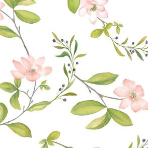 Blush  Magnolias