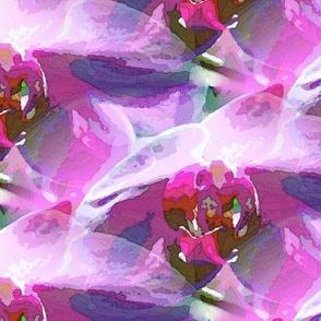 Purple phalenopsis