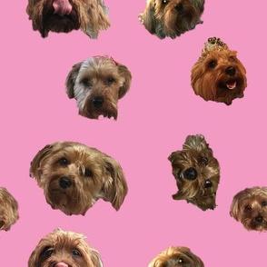 Cuddlesworth on Pink