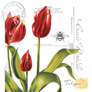 red tulip pillow
