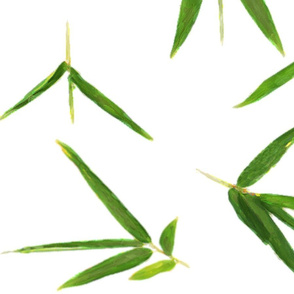 Bamboo Leaves on White 2X