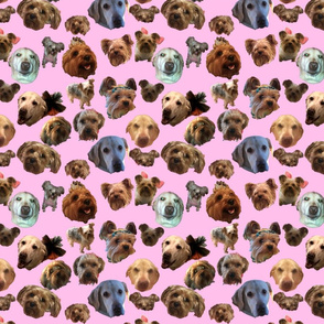 Puppy Explosion on Pink